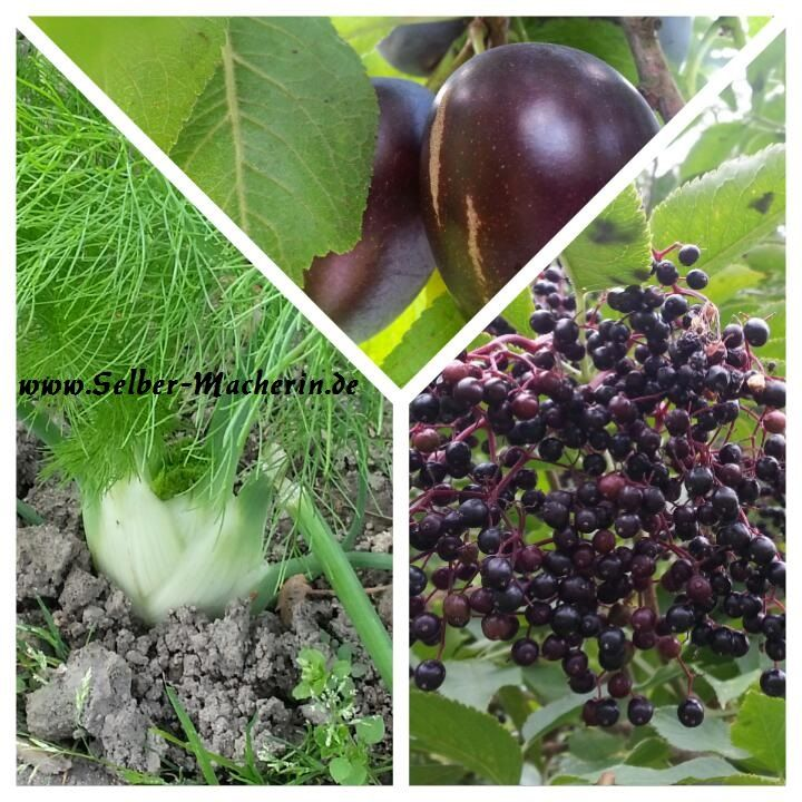 Selber-Macherin: Gartenkalender September: Das wird gesät, gepflanzt und…