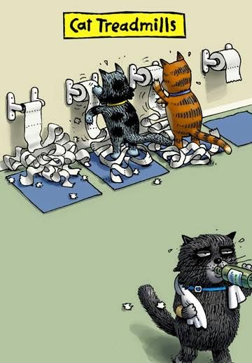 Cat fitness center