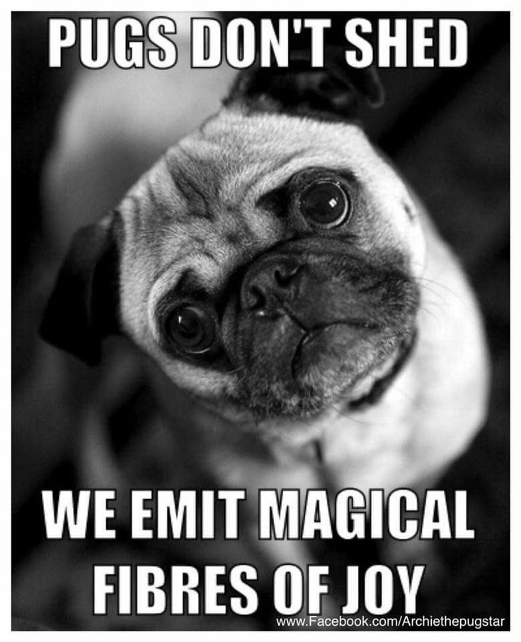 This is true, and if you don't vacuum regularly they can consume you and your home... but I would not give up my precious no matter how man magical fibers of joy she emits... ;-)