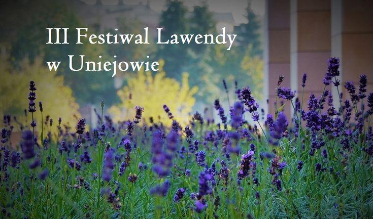 Lavender festival Uniejów