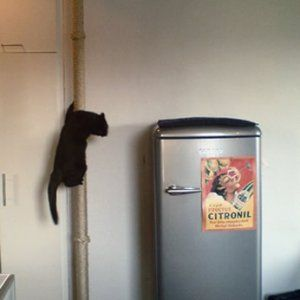 12 best amici animali images on pinterest cats cute for Tiragraffi ikea