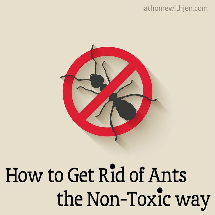 Best 20+ Get Rid Of Ants Ideas On Pinterest