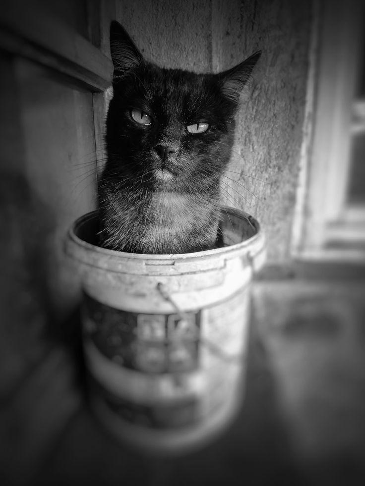 Gunner in the bucket! #bucket #cat #catoftheday #basicspace #blackandwhite #gunner