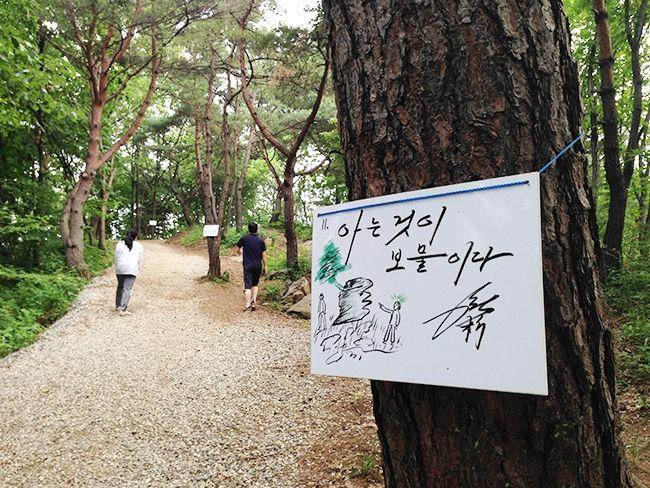 攝理新聞台: [月明洞時光] 漫步在林間~月明洞的森林療癒之旅
