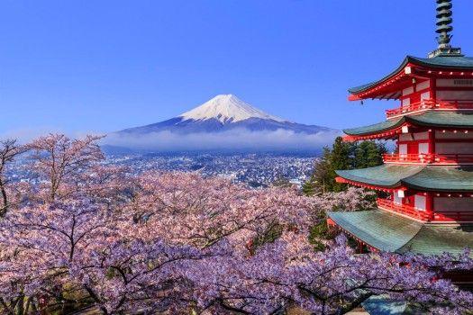 Bildergebnis für kirschblütenfest japan