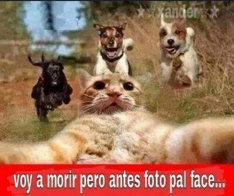 """This so funny, although I don't speak Spanish I've seen this before saying """"The last selfie"""" 😆😂😅"""