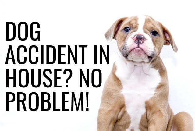 Dog Accident In The House No Problem Dogs Pet Urine Big Dogs