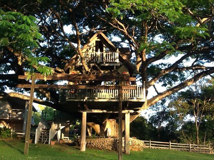 La casa del arbol saman dormil n en la hacienda don - Casa en el arbol ...