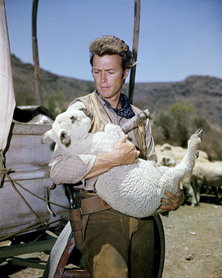RAWHIDE (CBS-TV) - Cattle drive ramrod Rowdy Yates (Clint Eastwood) is forced to look after a band of sheep - TV series.