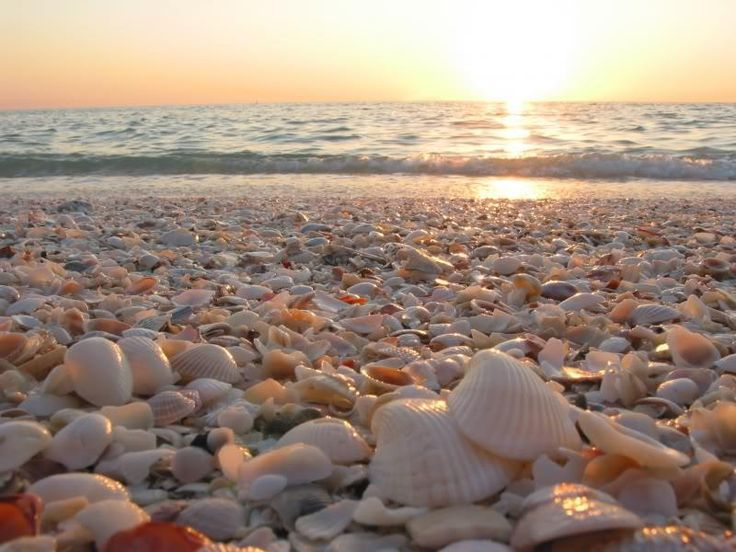"Beach near Corpus Christi, Texas..."" Little seashells left all alone,  Put them in your pocket and take them home."""