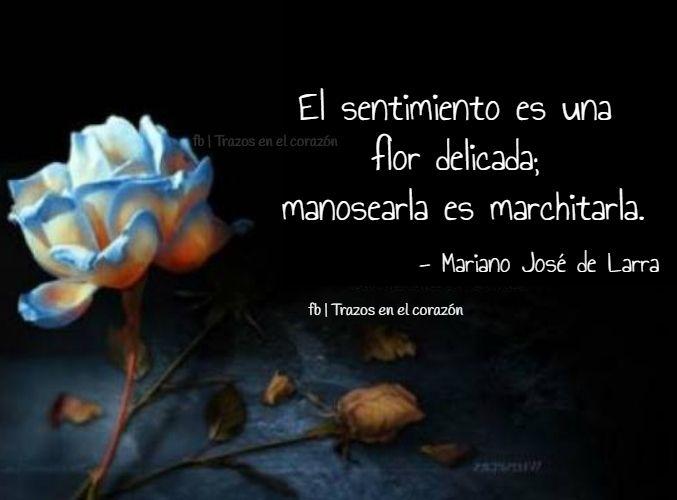 El Sentimiento Es Una Flor Delicada Manosearla Es Marchitarla Mariano José De Larra Trazosenelcorazon Sentimientos Corazones Frases