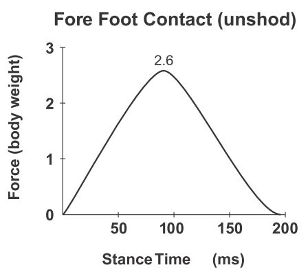Because there's less collision and loading between the body and the ground, no distinct double impact peaks are generated in a forefoot strike. In a sense, the smooth slope reflects the smooth interaction forfoot runners have with the ground during running http://runforefoot.com/impact-peaks/