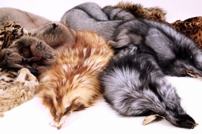 The Fur Industry Is Crashing, and You'll Love the Reason Why | News | PETA Asia