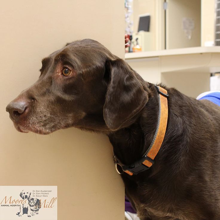 13+ Moores mill animal hospital images
