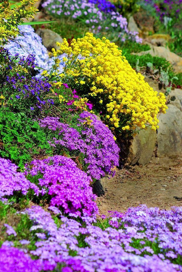 Rosliny Na Murek Garden Planing Dream Garden Perennials