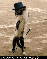 I Can't Stop Looking at This Dancing Cat .gif That Looks Just Like Christopher Walken