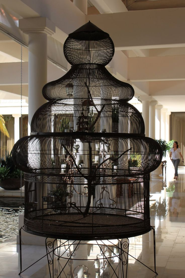 Best 25+ Bird cage ideas on Pinterest Bird cages for less, Bird cage decoration and Birdcage ...