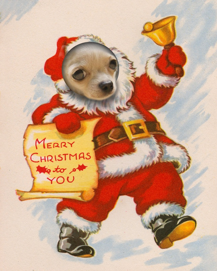 A Chihuahua's Christmas greeting, via Etsy.: Christmas Cards, Aye Chihuahua, Chihuahua Art, Animal Chihuahua, Chihuahua Packs, Chihuahua Christmas, Charms Chihuahua, Christmas Greeting, Christmas Chihuahua