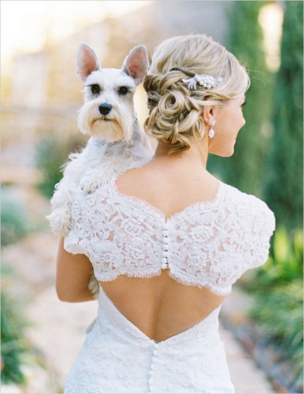Handsome doggie, matching with the bride! | http://www.weddingpartyapp.com/blog/2014/08/29/dogs-at-weddings-35-furry-friends/