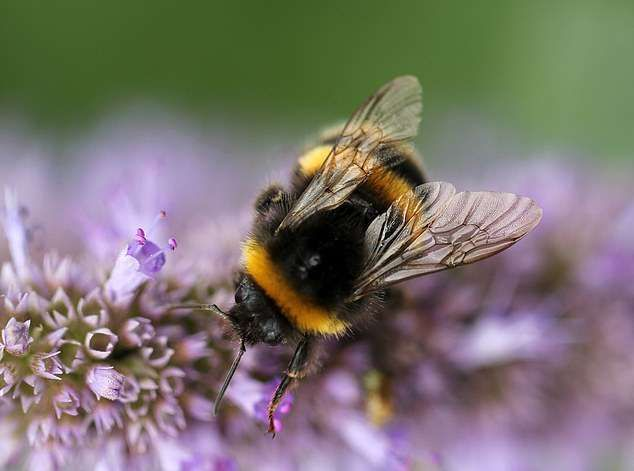 This Could Happen If Bees Go Extinct And What You Can Do To Save