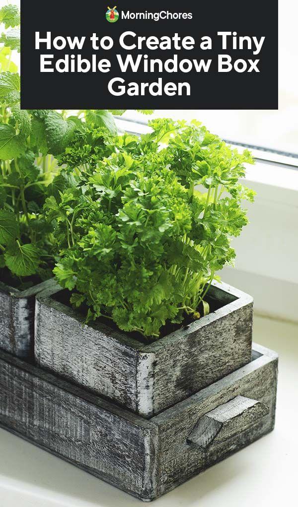 How To Create A Tiny Edible Window Box Garden Edible Garden
