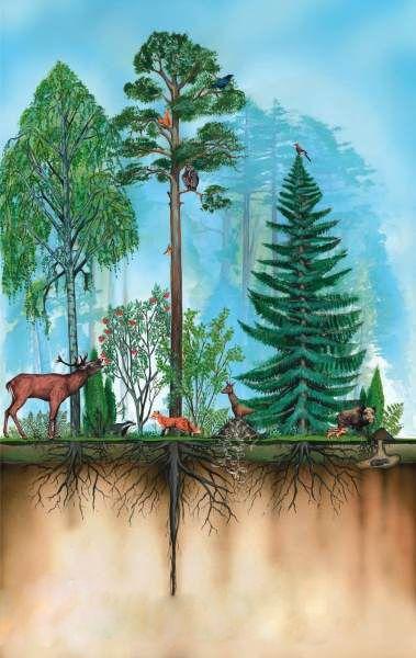 Budowa lasu: interaktywna prezentacja: rośliny i zwierzęta, warunki abiotyczne, galerie zdjęć