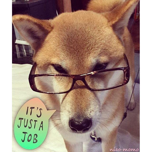 実家のワンちゃん♪ メガネが似合う柴犬のマルちゃん,女のコです☺︎ 家族のことが大好きらしく,こんなことされてもジッとしてますw #ワンちゃん #わんちゃん #犬 #いぬ #しばいぬ #柴犬 #愛犬 #ペット#かわいい #フォロー大歓迎 #フォローミー #相互フォロー
