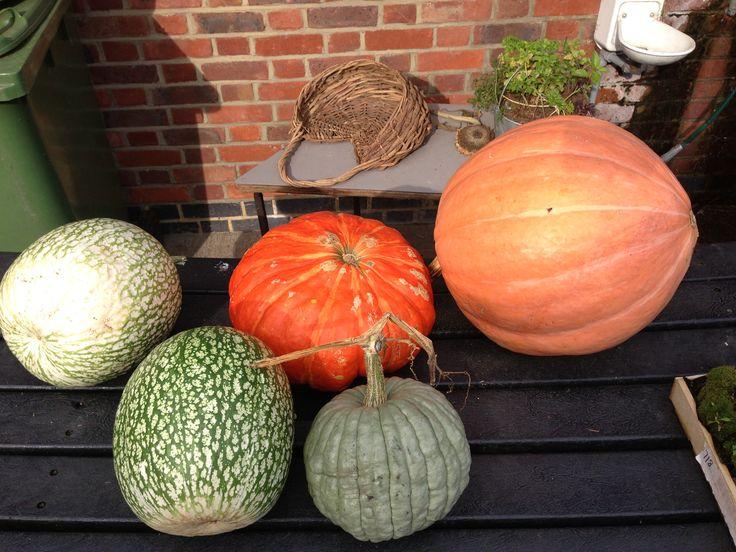 Pumpkins at Kentish Town Farm