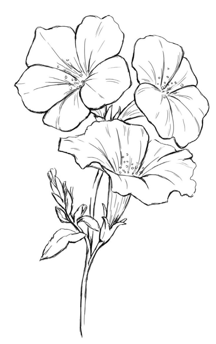 Line Drawing Flowers Blossom : Best petunia tattoo ideas on pinterest