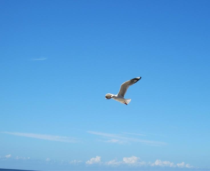 Seagull-Burleigh Heads