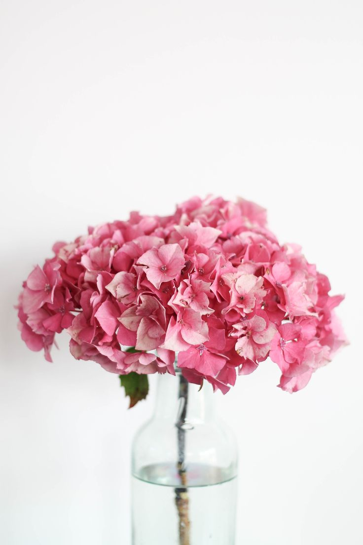 humphrey and grace | styling the seasons | hydrangea love