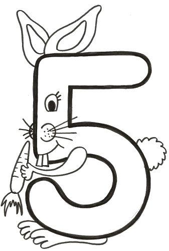 número cinco conejo