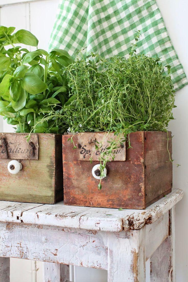 piante di spezie da cucina in antichi cassetti di legno