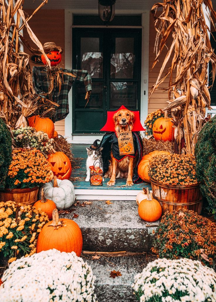 Ein lustiges Halloween – Noble Mädchen tragen Per…