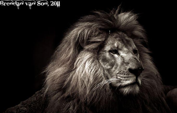 Photo of the Week: Lion Profile | Brendan's Adventures