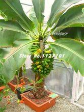 200 Unids/lote Muy Raras Perennes Bonsai Semillas De Plátano Al Aire Libre plantas Semillas Leche Sabor Fruta Deliciosa Semillas Para El Hogar y Jardín(China (Mainland))