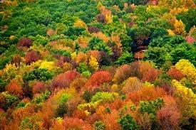 Appalachian Mountains...