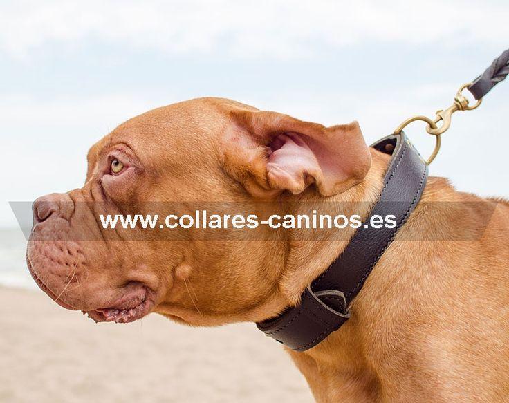 Ancho collar de adiestramiento para perros fuertes y grandes Dogo de Burdeos doble cuero - C33NH