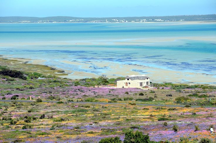 Spring in Langebaan. West Coast. South Africa.
