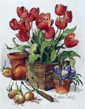 Tulips In Bloom by Barbara Mock