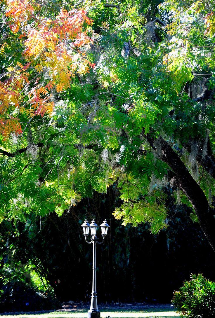 12 best Fall Color at the Coastal Georgia Botanical Gardens images ...