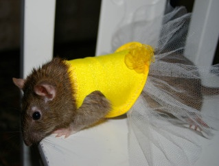 1000+ images about RAT COSTUMES on Pinterest | Hippies ...
