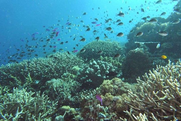 Komodo National Park #komodo #indonesia #diving #コモド島  有名なコモドドラゴンとダイビングで満足度MAX! バリ島経由でラブハンバジョ。そして超のんびりポンポン船。移動はぐったりです。