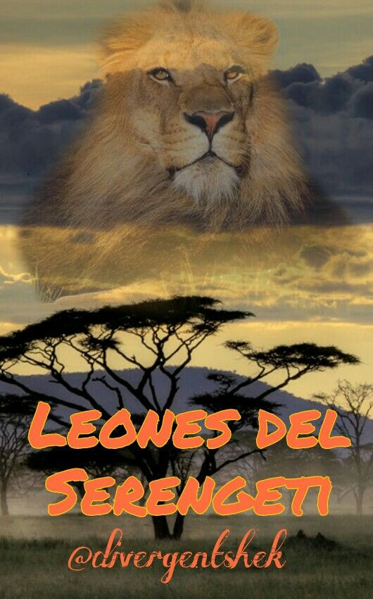Cover for my next project: Serengeti Lions