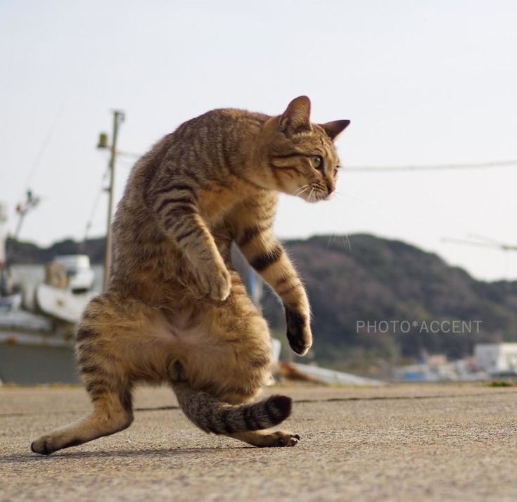 #Photography: #Cats Doing Martial Arts