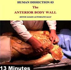 CADAVER DISSECTION  the anterior wall