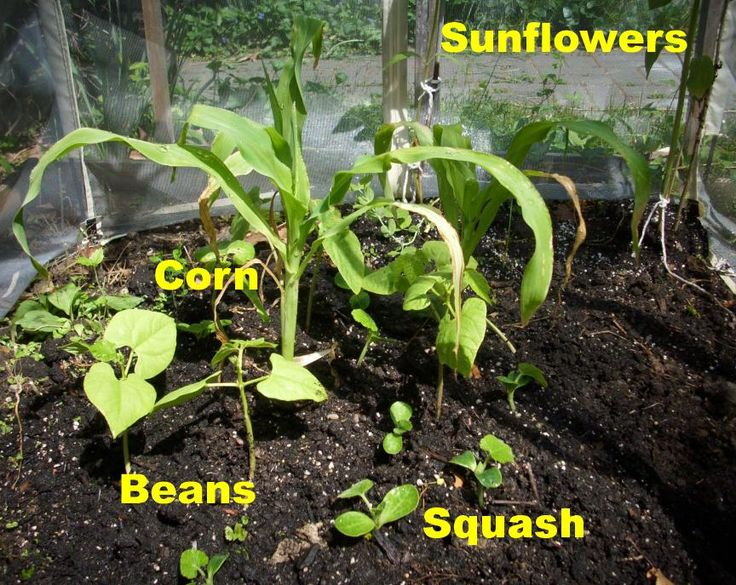 how to grow crops dont starve together