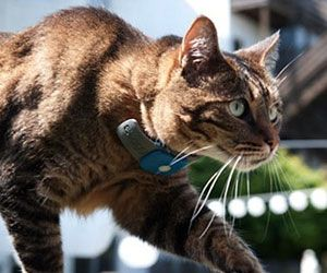 With the cat GPS tracking collar you'll be able to give your feline friends the independence they crave without losing track of them. The collar is...