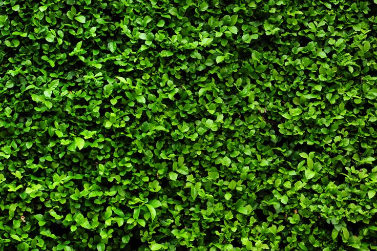 living wall seamless swatches pinterest living walls