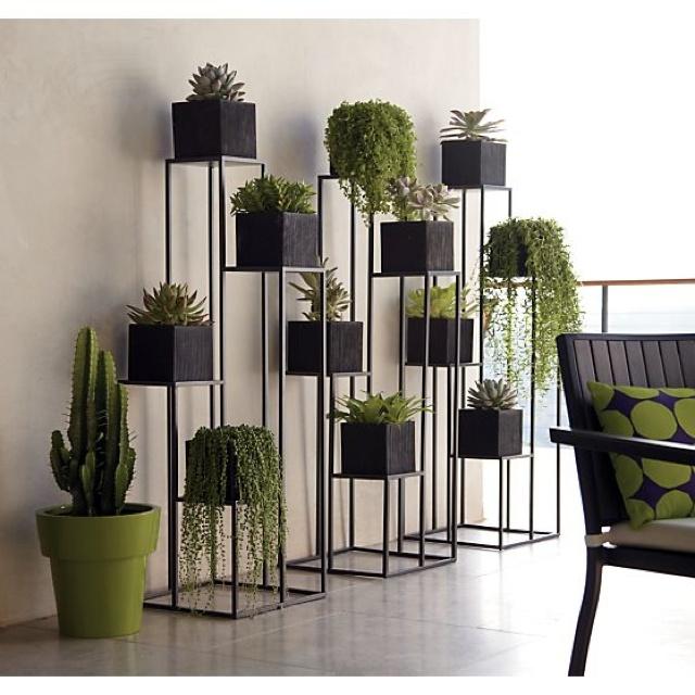 Beautiful indoor or outdoor garden
